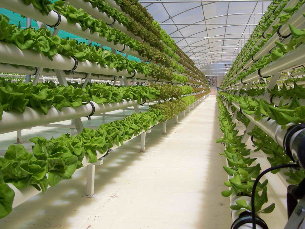 Выращивание овощей в теплицах как бизнес 98