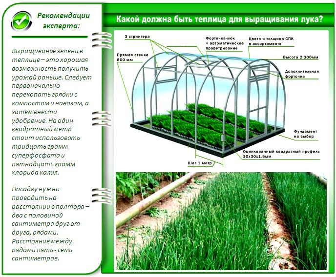 Теплица для выращивания зелени
