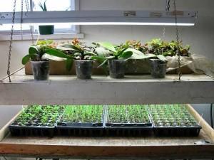 Выращивание зелени в квартире