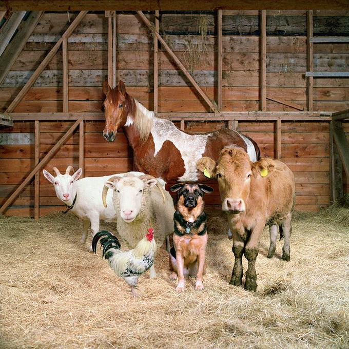 Животные в деревне