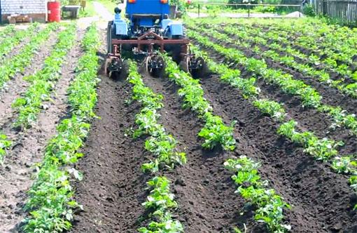Окучивание картофеля трактором
