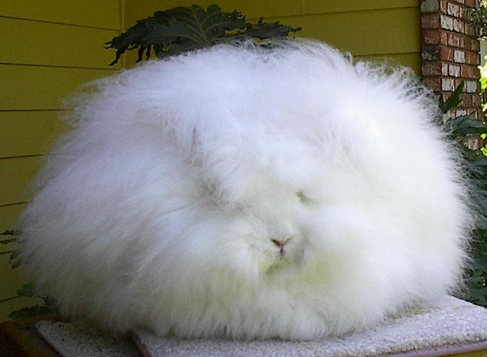 Пуховый кролик
