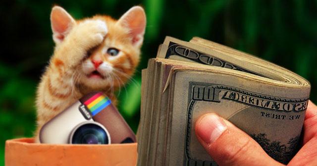 Котик и деньги