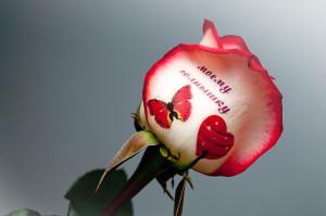 Надпись на цветке