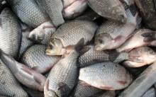 Руководство по построению бизнеса на разведении рыбы