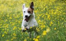 Разведение породистых собак как бизнес