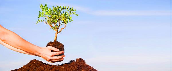 Растение сажают в землю