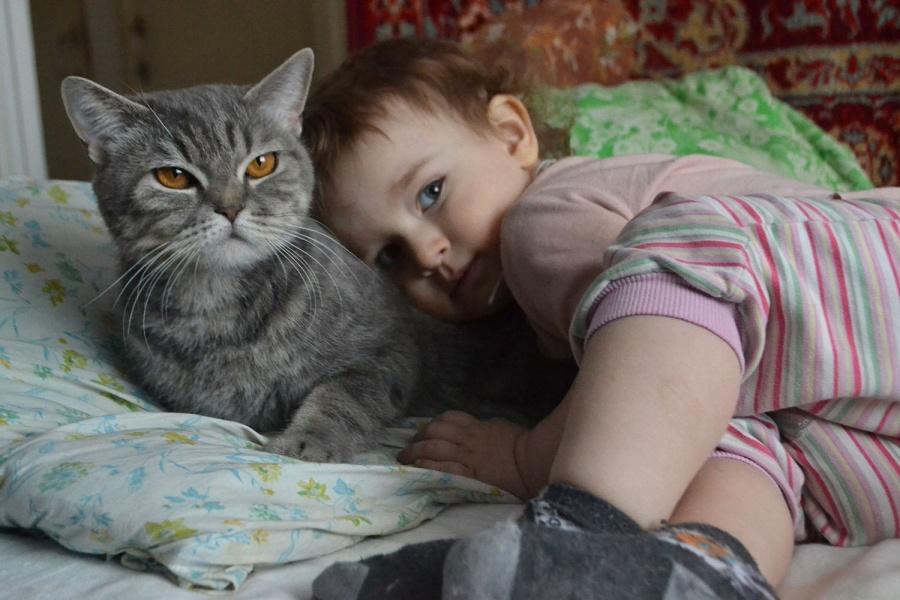 Кошка с реьбенком