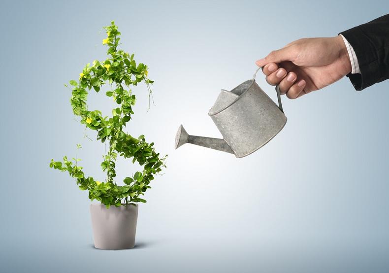 Растение в виде доллара