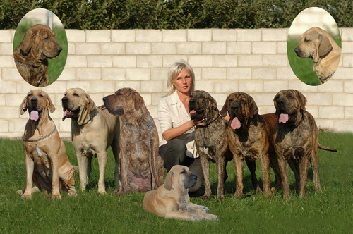 Женщина и собаки